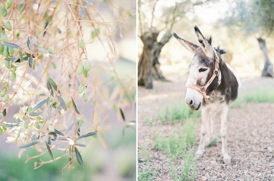 olive grove and a cute donkey | Squaresville Studios
